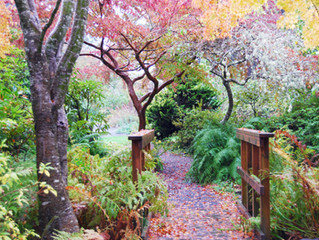 The Grateful Garden