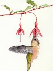 Hummingbird Plants