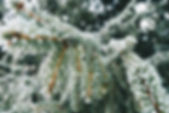 emil-vilsek-488155-unsplash.jpg
