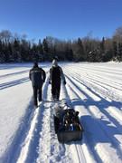 pulling a sled.JPG