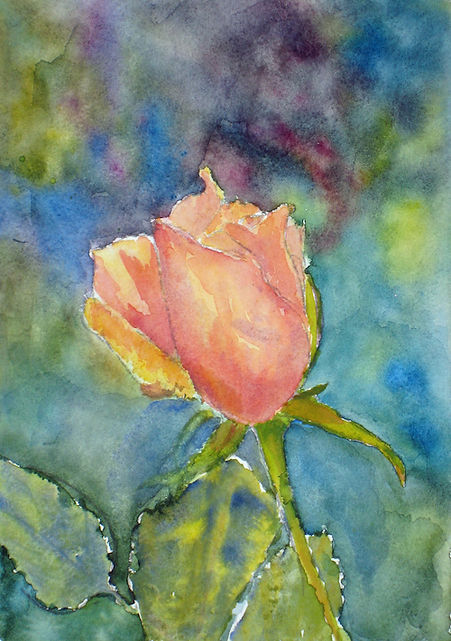 Rose study watercolor  8x10 unframed $35