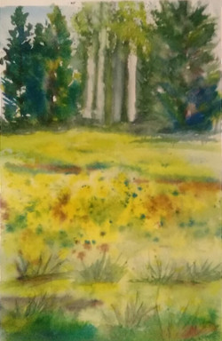 Mill Creek Meadow