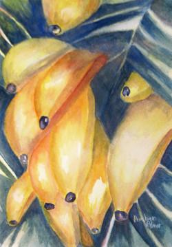 Hilo Bananas
