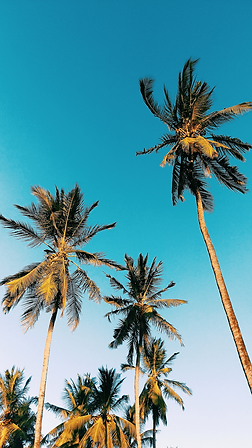 low-angle-photography-of-palm-trees-unde