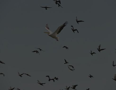 business_migration_edited.jpg