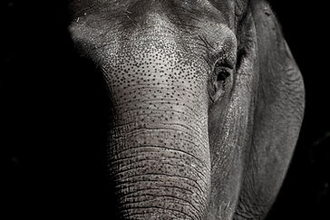 elephant-3728225_1920.jpg
