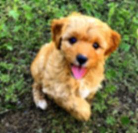 Baxter best 6.jpg
