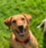 Dog walking kensington and chelsea