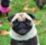dog care kensington