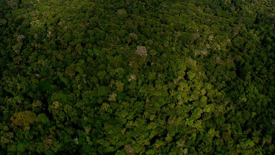 Amazon Alive_Part 1_Aerial3.jpg