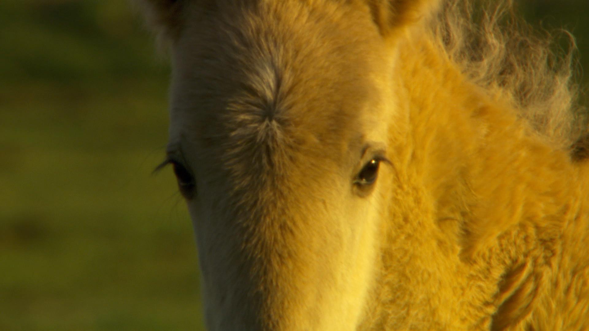 Wildpferde (6).jpg