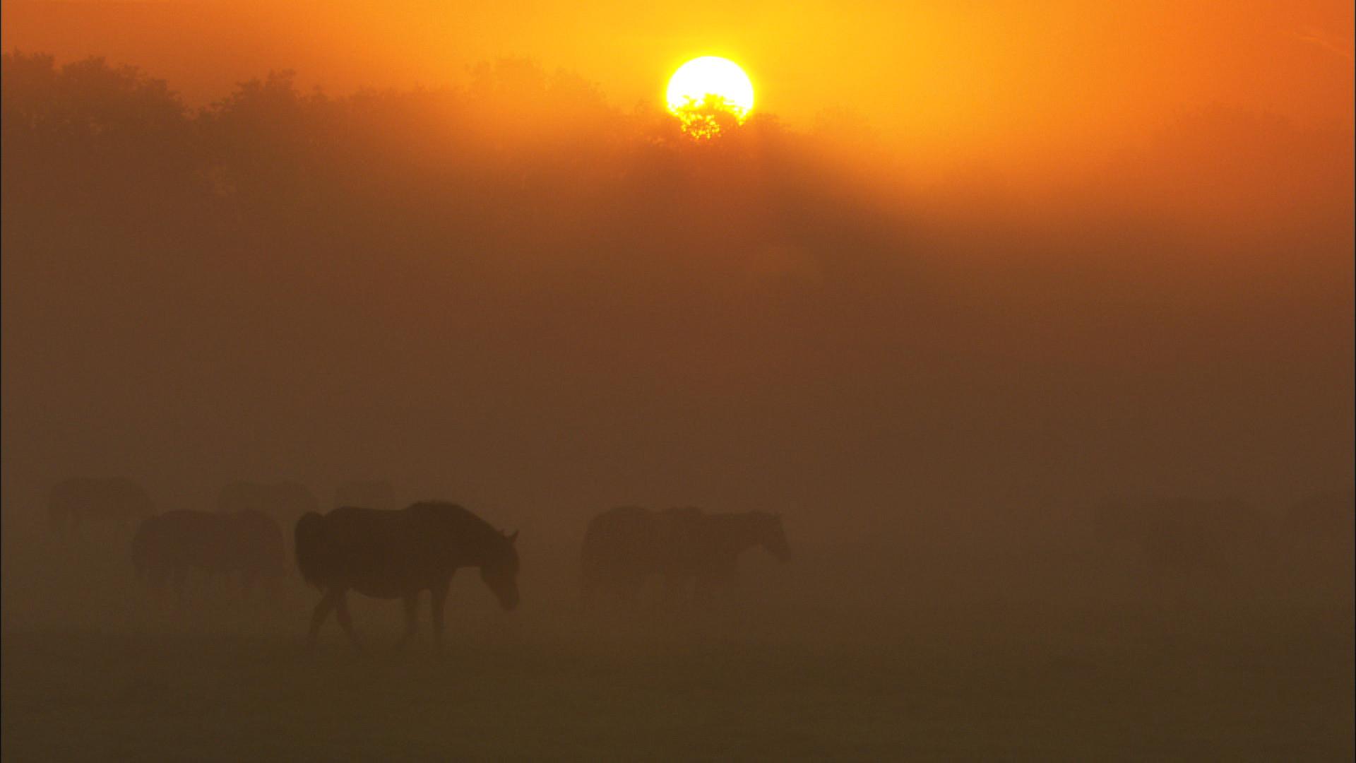 Wildpferde (29).jpg