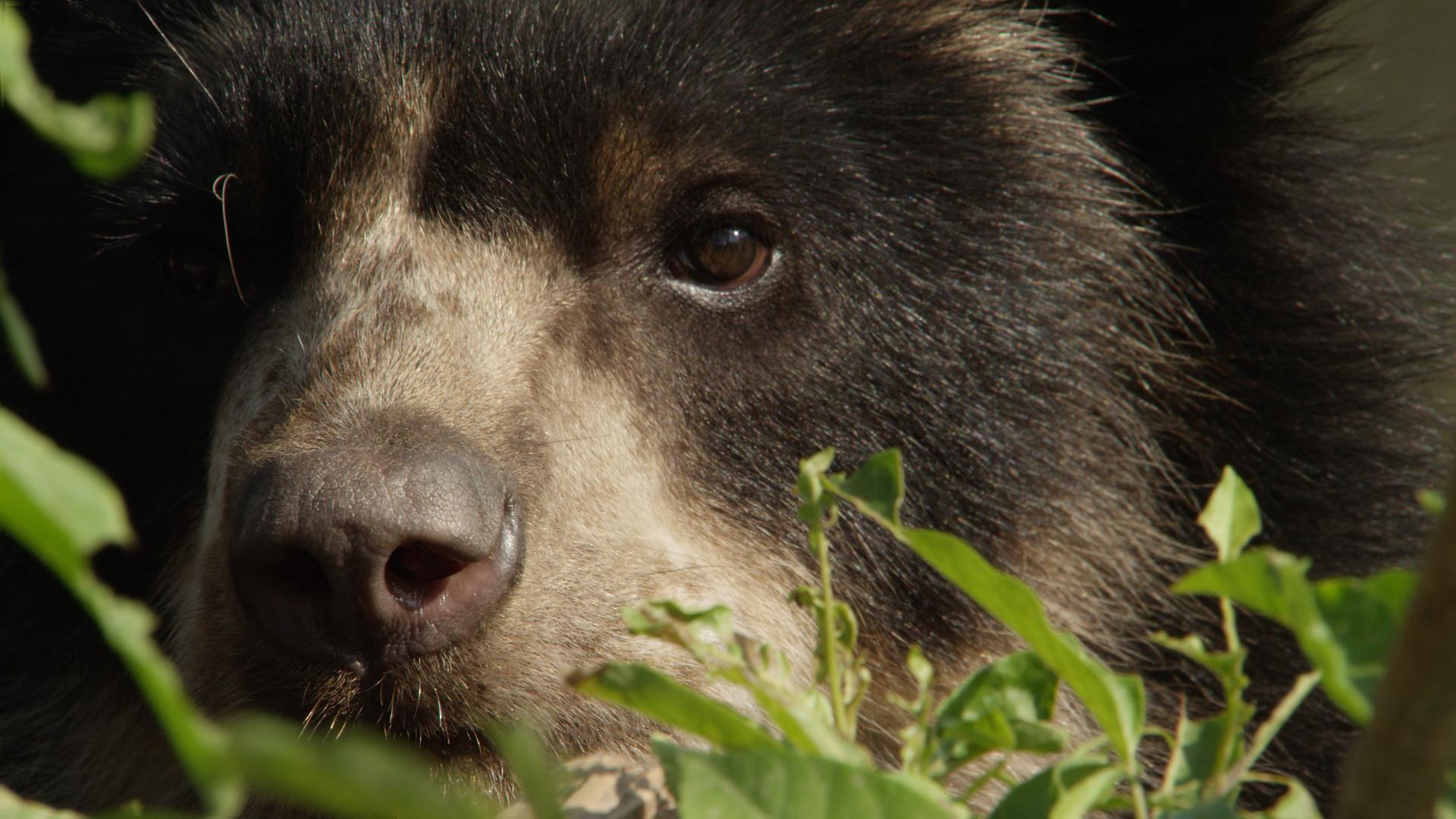 TWA_Ep1_04_bear.jpg