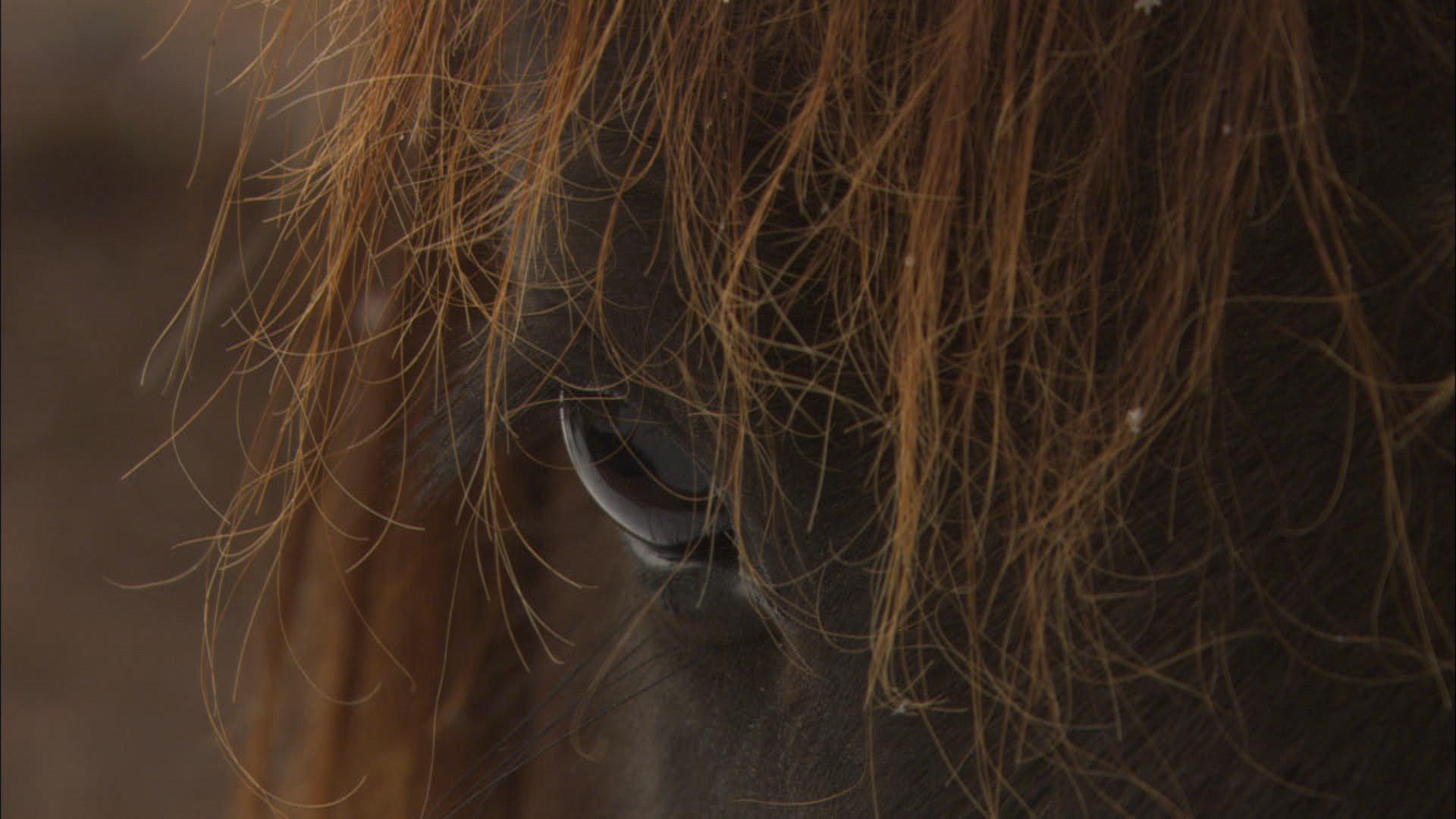 Wildpferde (57).jpg