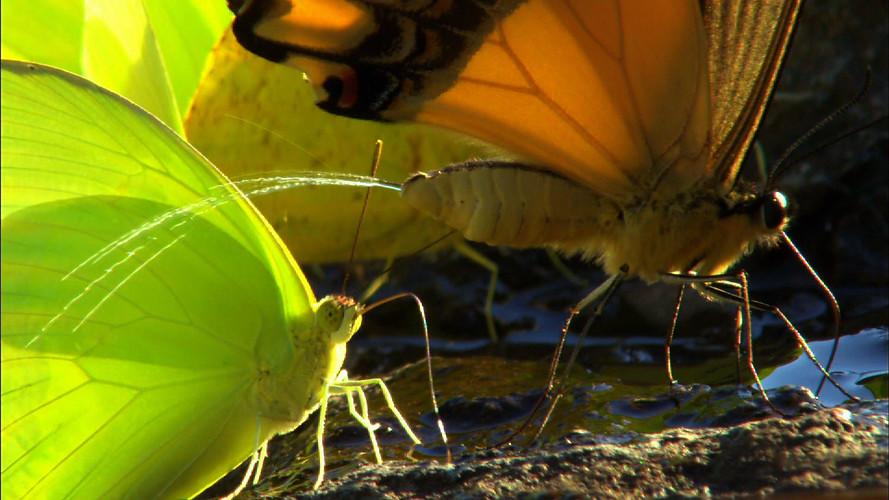 Iguacu (8).jpg