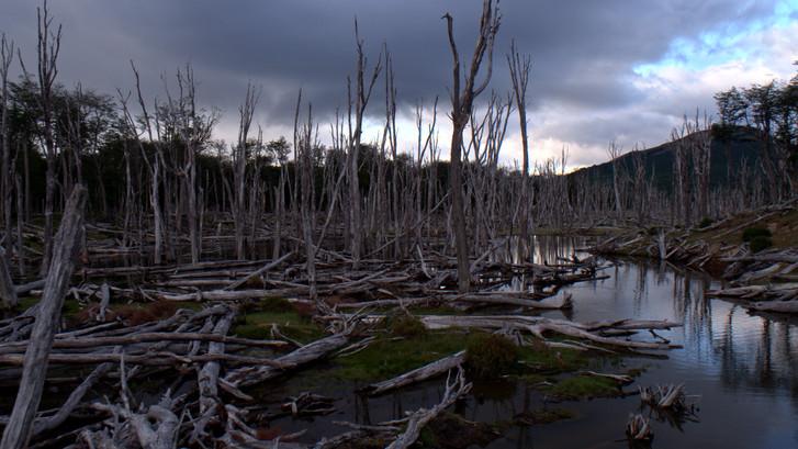 TWA_Ep3_35_dead_forest.jpg