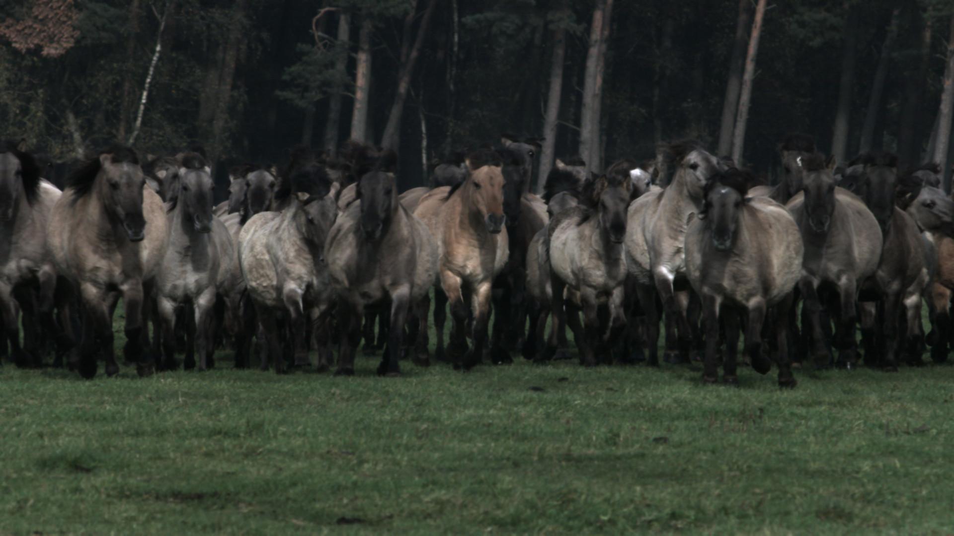 Wildpferde (1).jpg