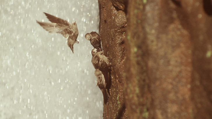 Iguacu (6).JPG