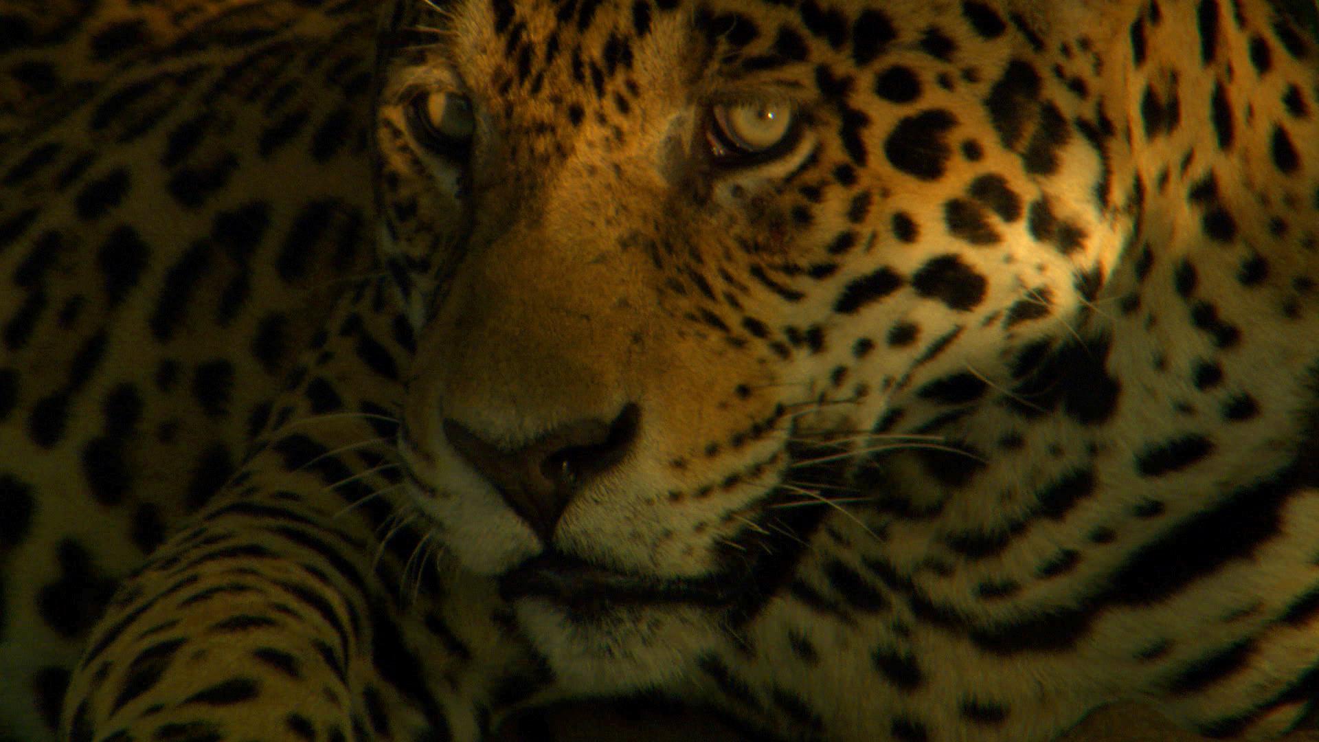 Jaguar (9).jpg