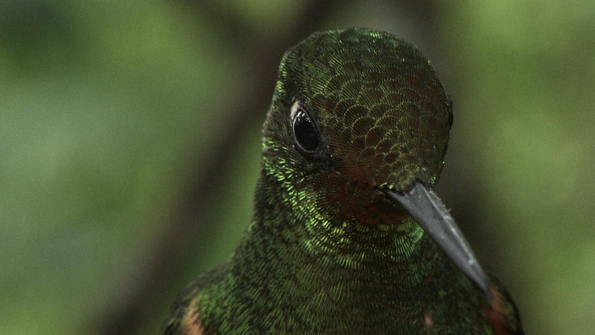 TWA_Ep1_02_hummingbird.jpg