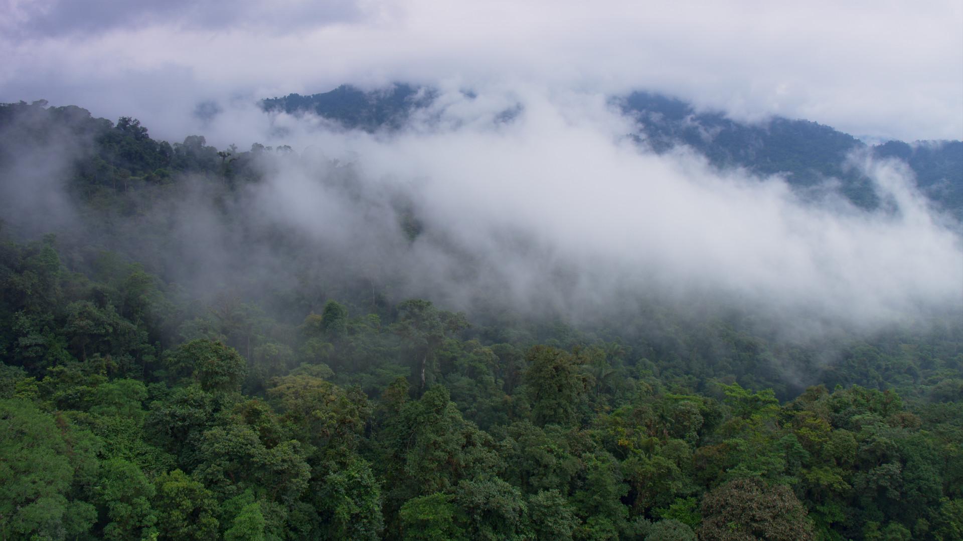 TWA_Ep1_22_cloudforest.jpg