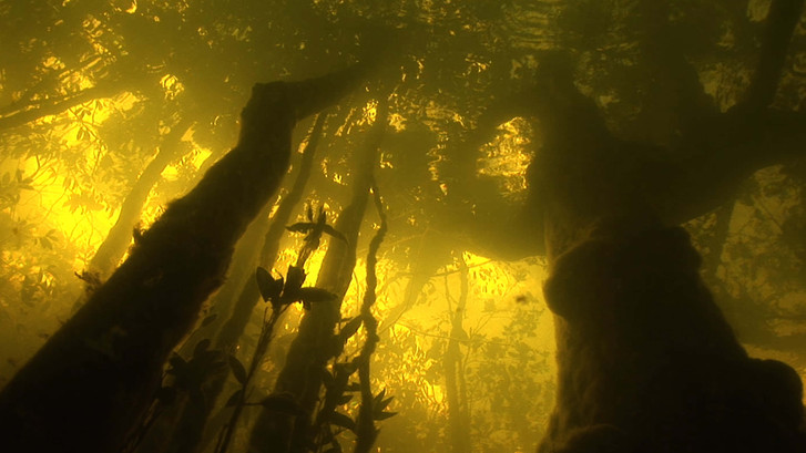 Amazon Alive_Part 1_Flooded Forest_1MB.j