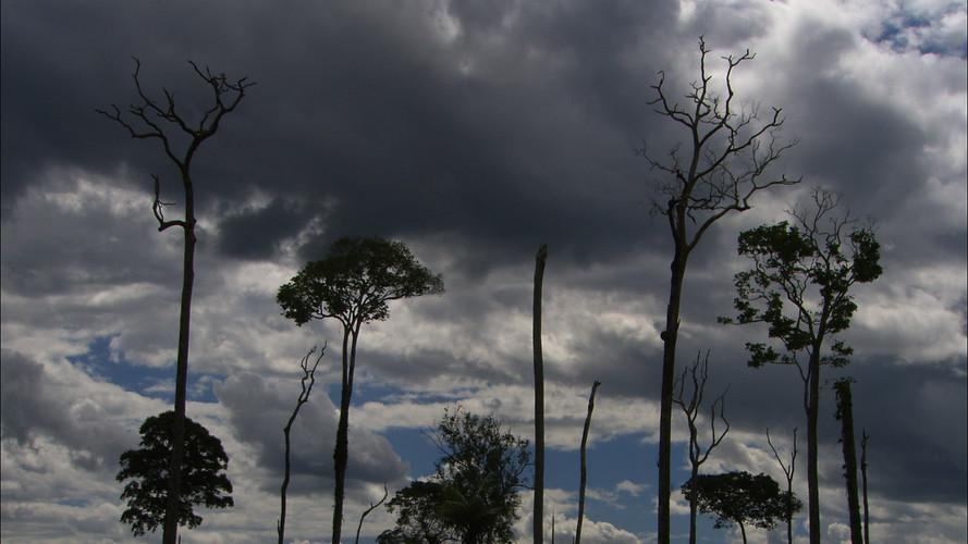 Amazon Alive_Part 3_Dead Trees.jpg