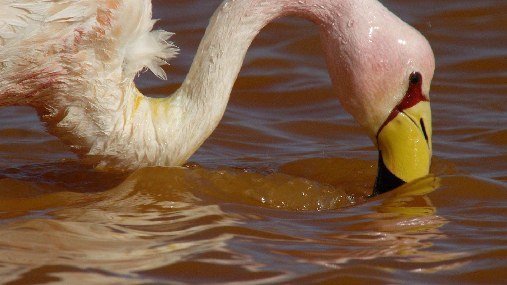 TWA_Ep2_05_flamingo.jpg