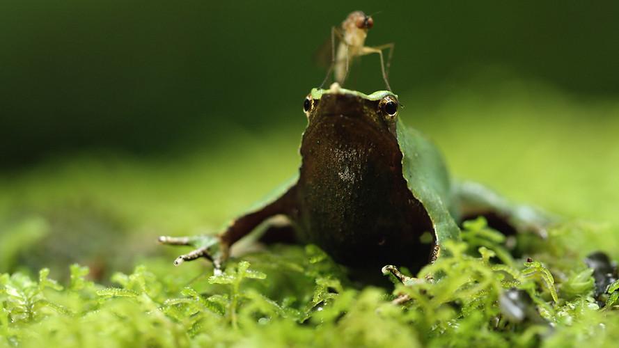TWA_Ep3_16_Darwin_frog.jpg