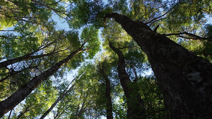 TWA_Ep3_02_Valdivian_Rainforest.jpg