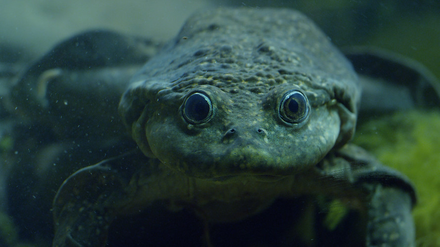 TWA_Ep2_07.giant_frog.jpg