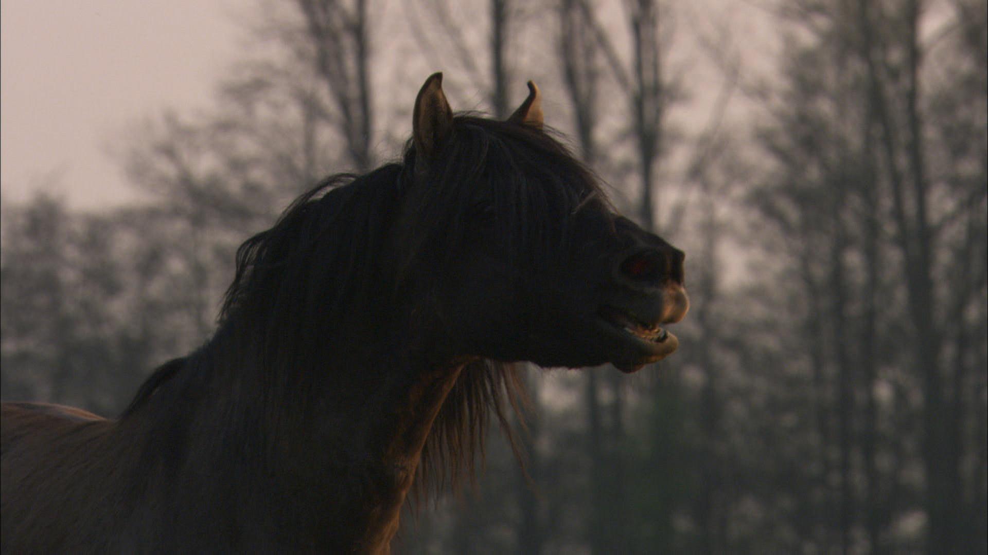 Wildpferde (12).jpg