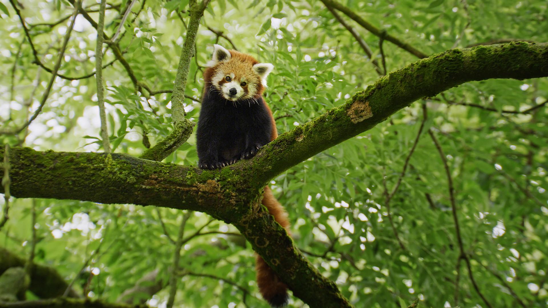 L&S_Pressefotos_ZOO_EP1_100_Panda.jpg