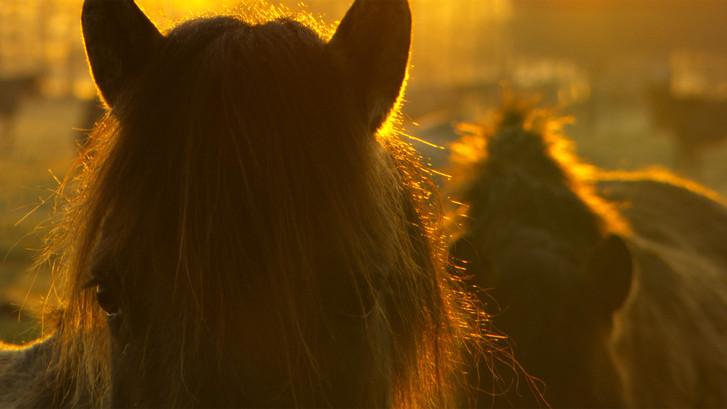 Wildpferde (46).jpg