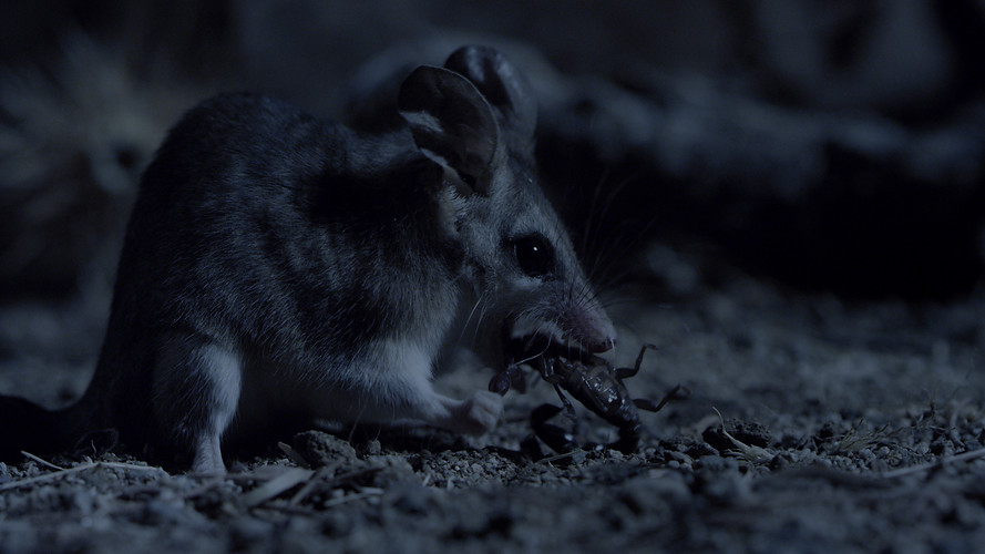 TWA_Ep3_32_Mouse_Opossum.jpg