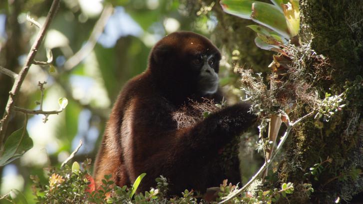 TWA_Ep1_16_wooly_monkey.jpg
