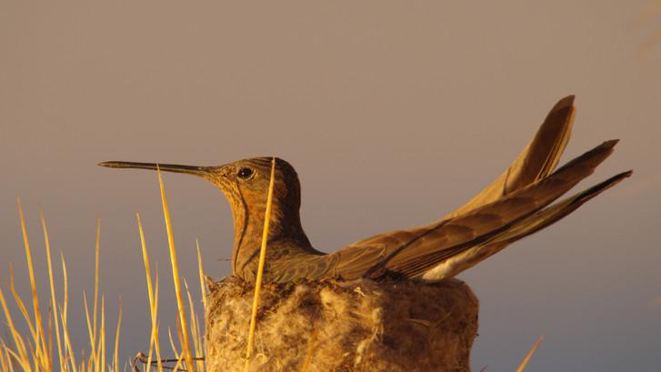 TWA_Ep2_21_Hummingbird.jpg