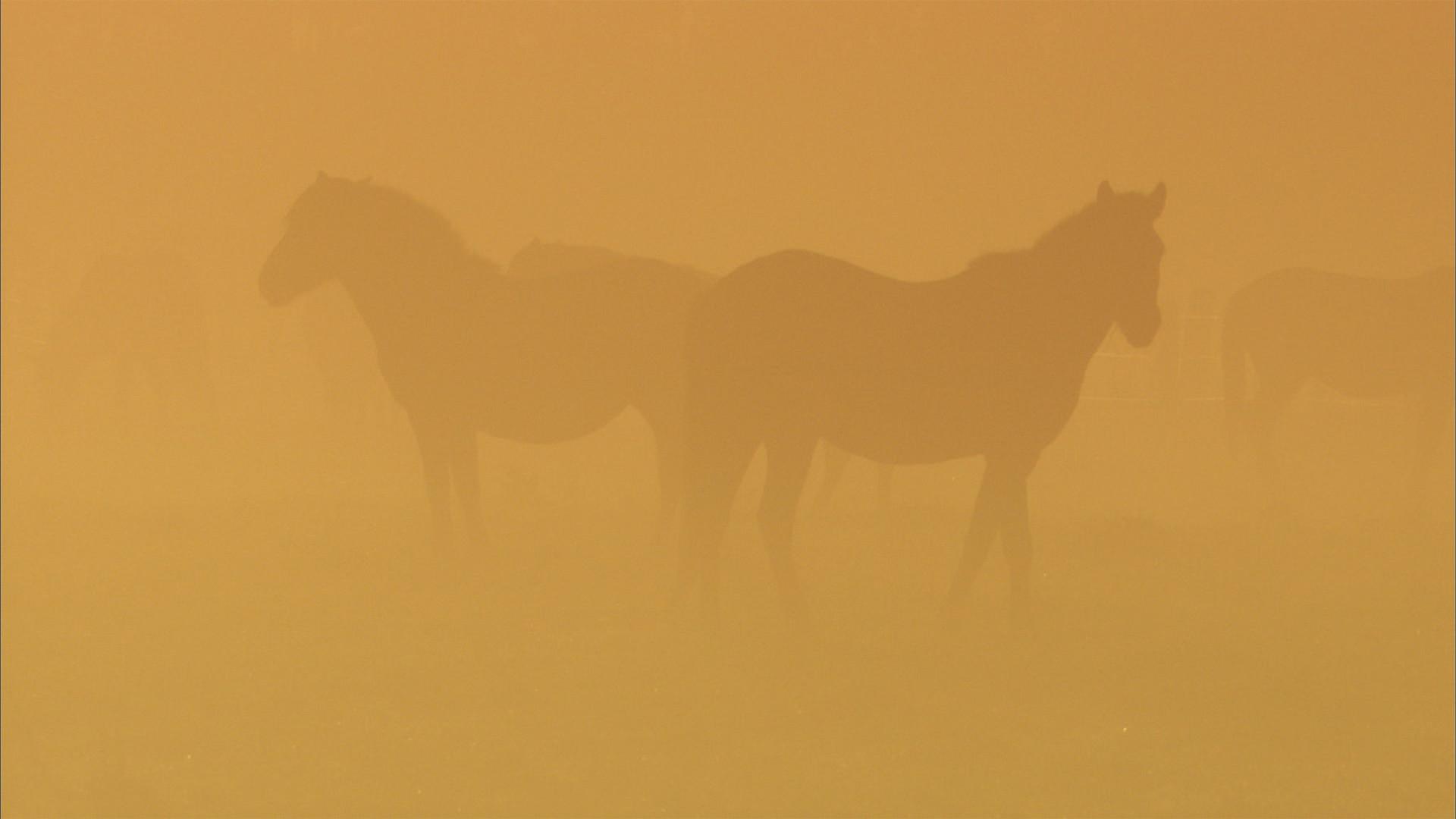 Wildpferde (2).jpg