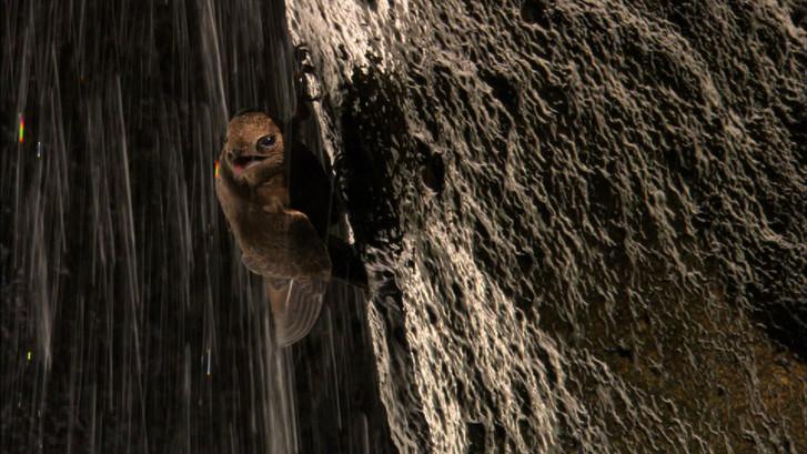 Iguacu (17).jpg