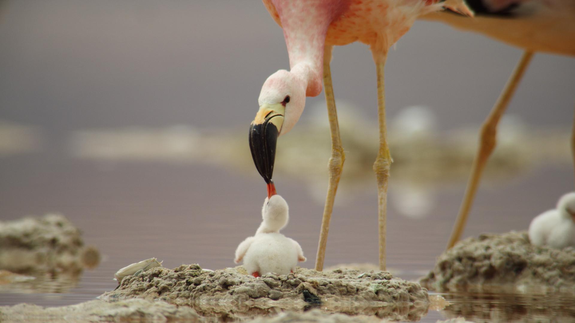 TWA_Ep2_28_flamingo.jpg