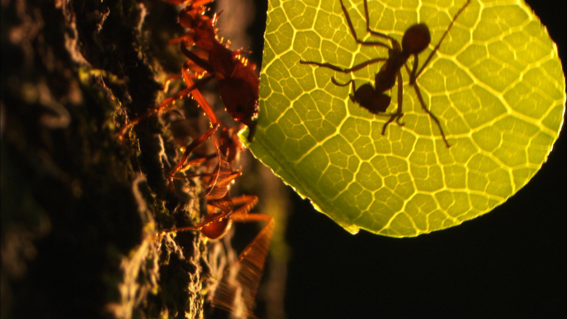 Amazon Alive_Part 1_Ants.jpg