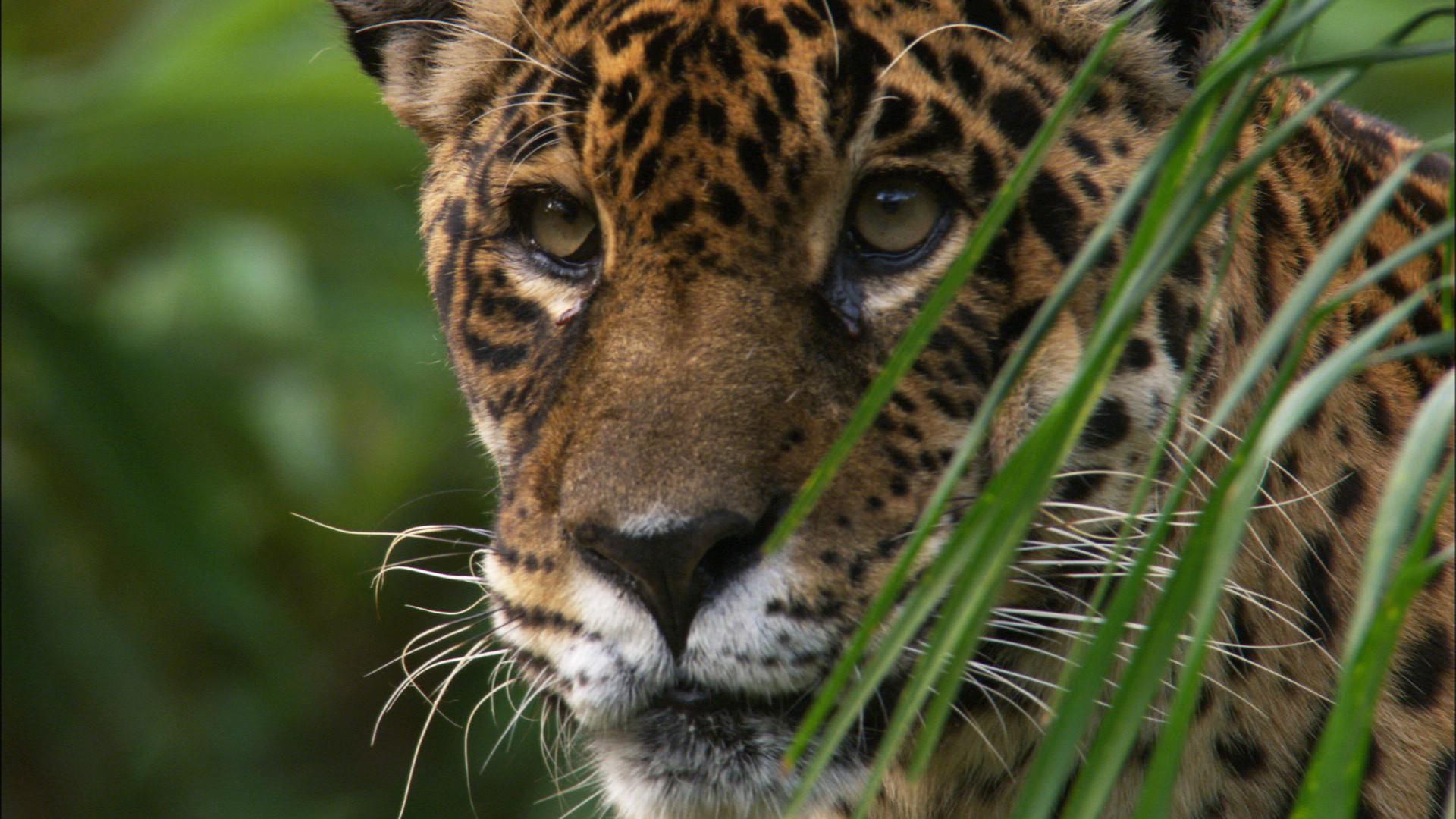 Iguacu (16).jpg