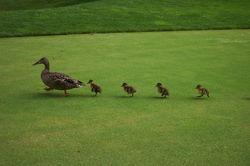 ducks & ponds '06 054