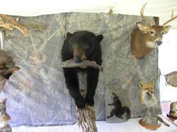 MID17-Stuffed Animals