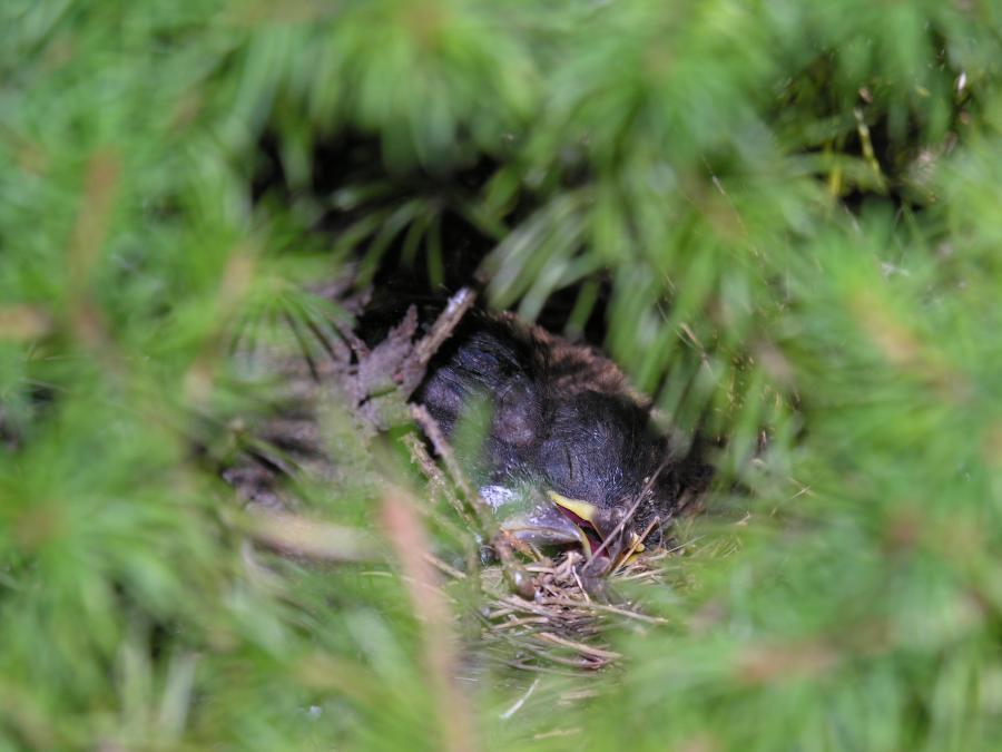 Nest-3