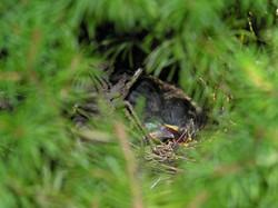 Nest-4