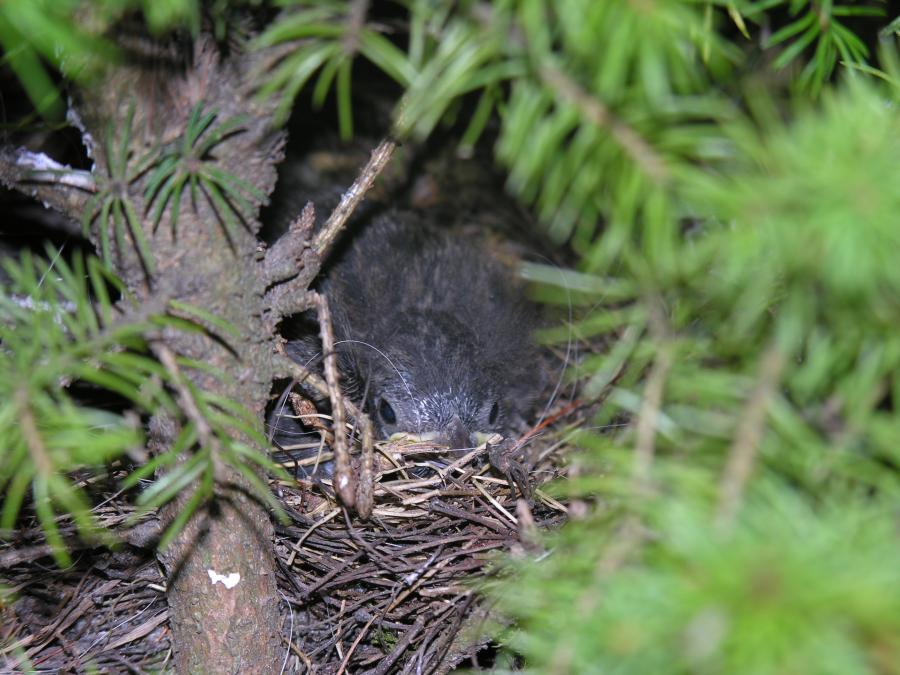 Nest-5