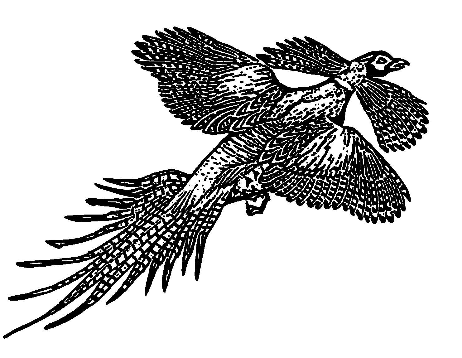 Danghu-bird