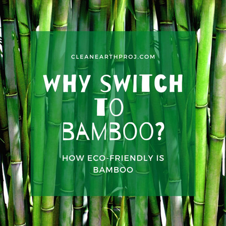 Why switch to Bamboo? Learn how Eco-Friendly Bamboo is!