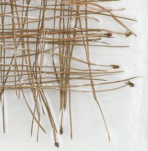 web_Pina Nigra, Detail.jpg